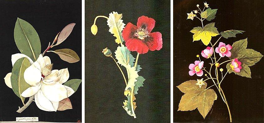 Decoupage Flowers