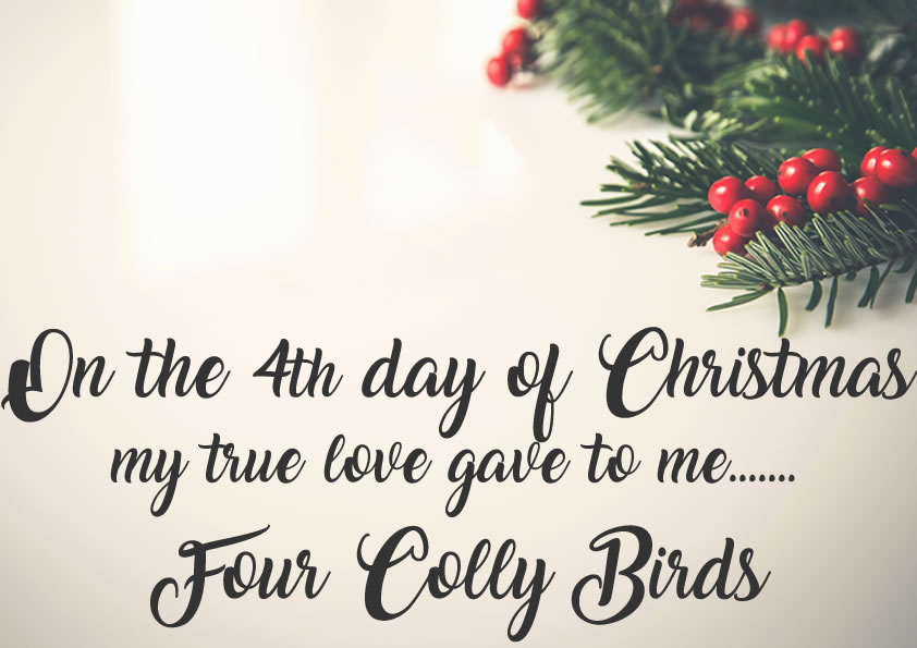 On the Fourth Day of Christmas my true love gave to me.. Four Colly Birds   be creative daily!
