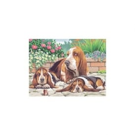 Basset Hounds Large Painting By Numbers