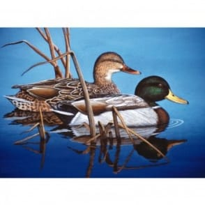 Blue Water Mallards - Large Paint by Numbers