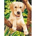 Junior Paint by Numbers Labrador