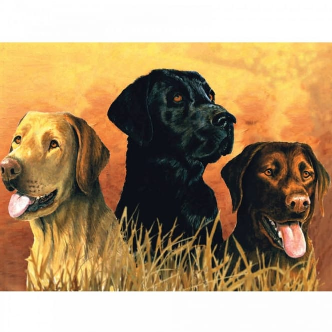 Labs in Marsh The Artists Collection Painting by Numbers