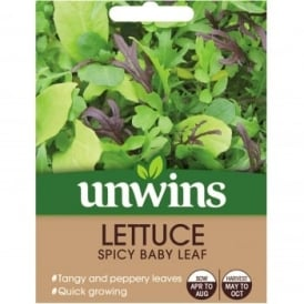 Lettuce Seeds - Spicy Baby Leaf