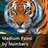 Medium Paint by Numbers