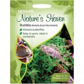 Natures Haven Buddleia Miss Butterfly Seeds
