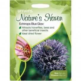 Natures Haven Echinops Blue Glow Seeds