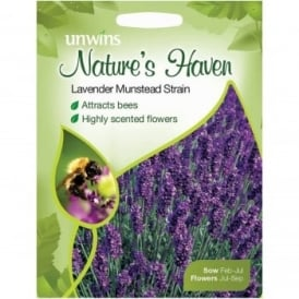 Natures Haven Lavender Munstead Strain Seeds