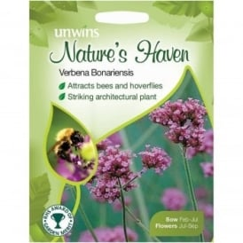 Natures Haven Verbena Bonariensis Flower Seeds