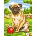 Pug Junior Painting By Numbers