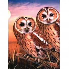 Tawny Owls - Medium Paint By Numbers