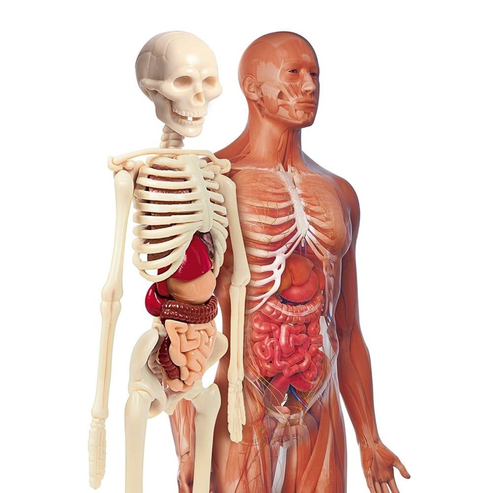 The Human Body Game Craftyarts