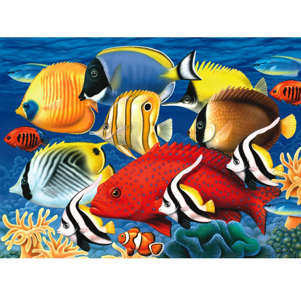 Tropical Fish Large Paint By Numbers Royal Langnickel