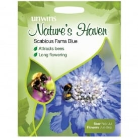 Wildflower Seeds- Scabious Fama Blue
